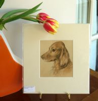 Irish Setter - colour head 1930's print by Lucy Dawson- Set D4